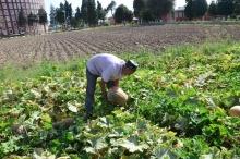 Сбор урожая на подсобных землях Академии МВД