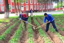 Озеленение и посадка деревьев в Академии МВД
